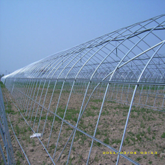 Galvanized Steel Pipe Use for Warmhouse and Greenhouse